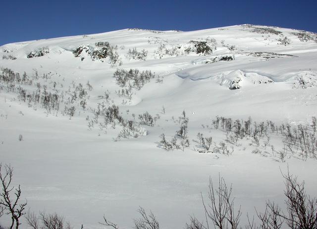 Fjällen är fortfarande snötäckta men i de någorlunda snöfria klippbranterna har jaktfalken påbörjat sin häckning. Foto: Falkdalen